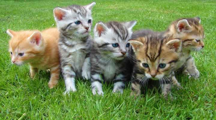 kitten cat rush lucky cat
